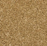 Phenix Carpets