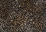 Royal Dutch Carpets